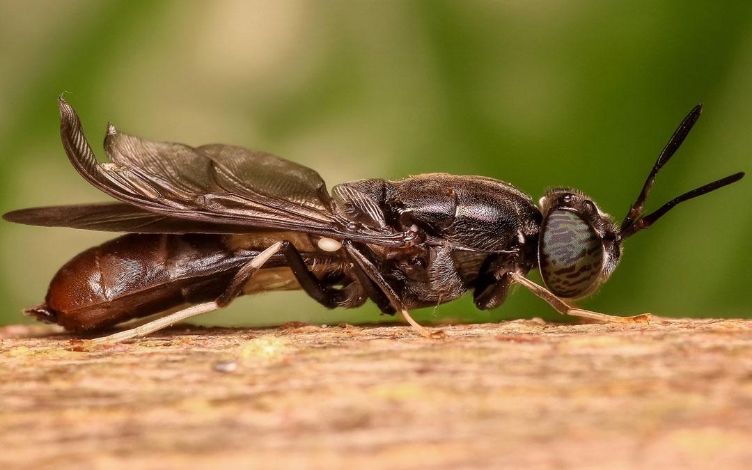 La mouche - Poème
